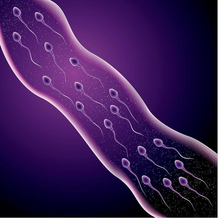 mastubation and sperm count