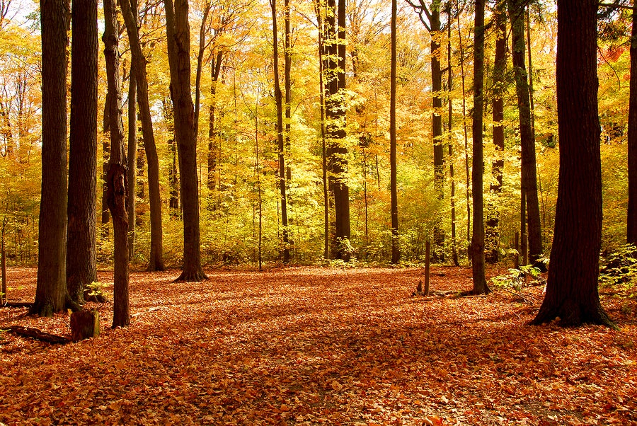 photo of an autumn forest.
